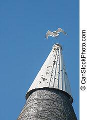 gull on an oast house
