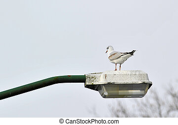 Gull on lamppost