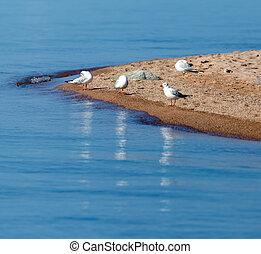 Gull on the lake