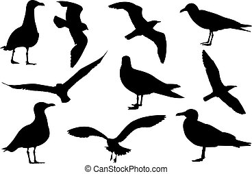 Gull Silhouette vector illustration