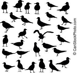 Gull Silhouette, vector