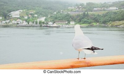 Gull sits on handrail and then flies away at fiord with...