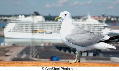 Gull sits on handrail in port with cruise liner at sunny day