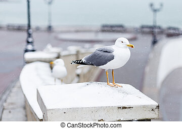 Gull sitting on the snow in city a winter day