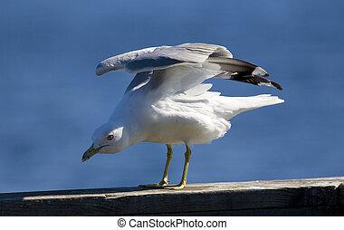 Gull Stretching