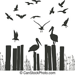 Gulls and pelicans - vector illustration flying seagulls and...