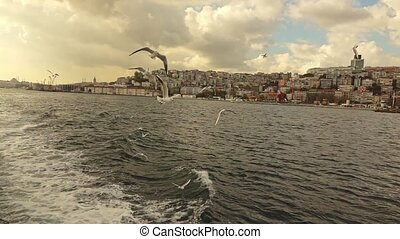 gulls are flying over the sea - waves from the ship to the...