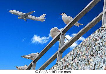 Gulls, blue sky, airplane