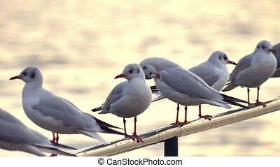gulls close up slow motion
