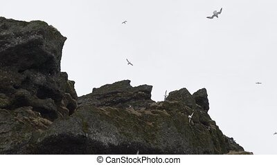 gulls fly over the rocks.