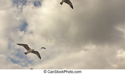 gulls flying in the gray sky - Seagulls Flying High In The...