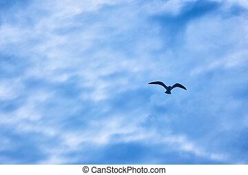 gulls flying in the sky