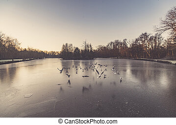 Gulls flying over a frozen lake in the winter