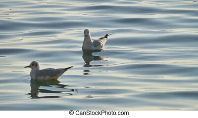 gulls in lake close up 4k