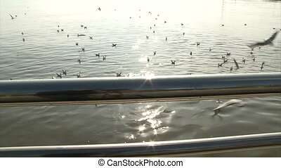 Gulls in the sea