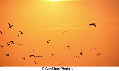 gulls in the sky at sunset 2