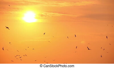 gulls in the sky at sunset, slow motion 1