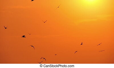 gulls in the sky at sunset, slow motion 2