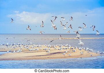 Gulls in the sky, beach, Baltic Sea