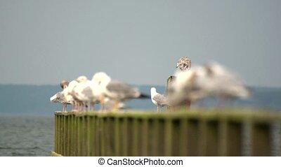 gulls on a peer
