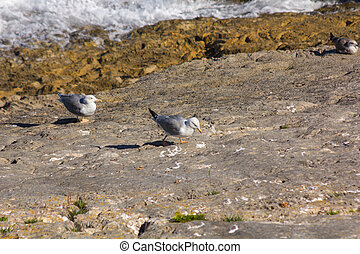 gulls on rocks by the sea