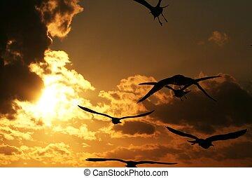 gulls on the coast at sunset 6