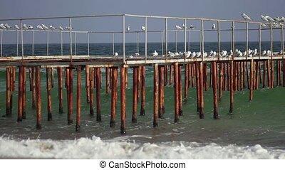 Gulls on the iron pier on the sea. - Seagulls are sitting on...