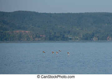Gulls on the lake on a clear summer day. Summer landscape.