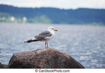gulls on the lake