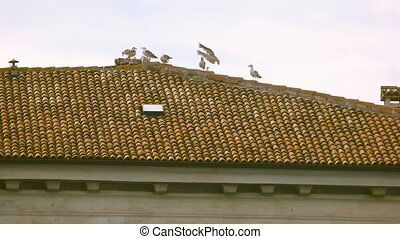 Gulls on the roof. Birds, building and sky.