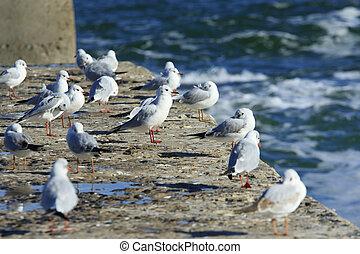 Gulls rest
