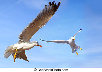 Gulls flying in the blue sky close-up