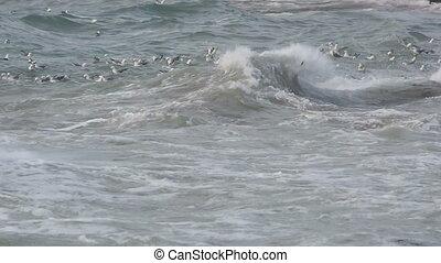 Gulls swimming in the waves of the Atlantic ocean