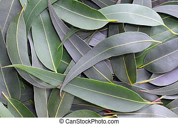 Gum leaves form a full-frame natural background. The subtle grey green tones of the Australian bush.