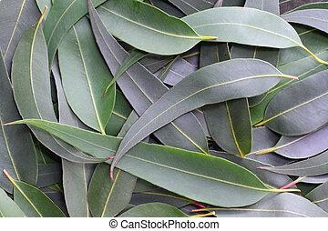 Gum leaves form a full-frame natural background. The subtle grey green tones of the Australian bush.