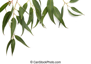 Border of gum leaves, casting soft shadow on white.