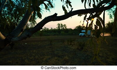 Gum tree leaves hanging by an outback road - A shallow depth...
