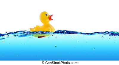 gumikacsa, úszó, alatt, víz