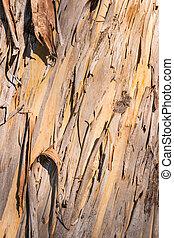gummi, träd, med, skälla, skalande, av, in, remsan