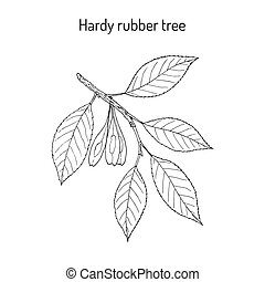 gummibaum, baum, ulmoides, abgehärtet, eucommia, medizinisch
