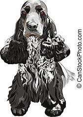 gun dog English Cocker Spaniels sitting - close-up portrait...