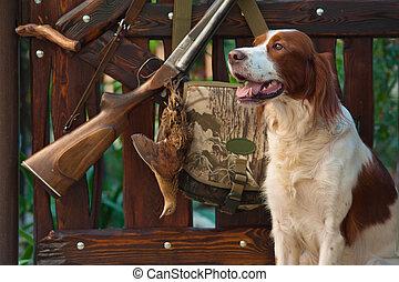 Gun dog near to shot-gun and trophy, outdoors - Gun dog near...