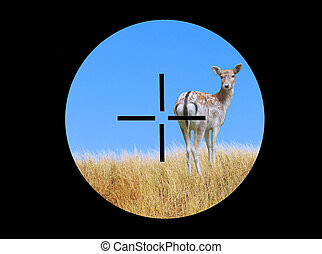View of a deer through a telescopic sight
