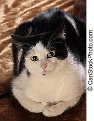 Gussy Cat