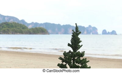 guy and Christmas tree on the beach