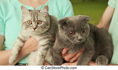 Guy and girl holding hands on the Scottish Fold cat and gray British cat.