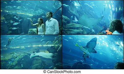Guy and Girl walk on an underwater aquarium. - Guy and Girl...