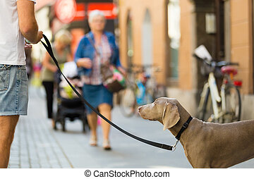 Guy with dog on leash. - Guy in the city center with a dog...