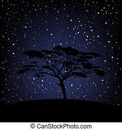 gwiaździsty, na, drzewo, noc