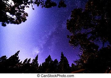 gwiazdy, w, przedimek określony przed rzeczownikami, niebo, w nocy
